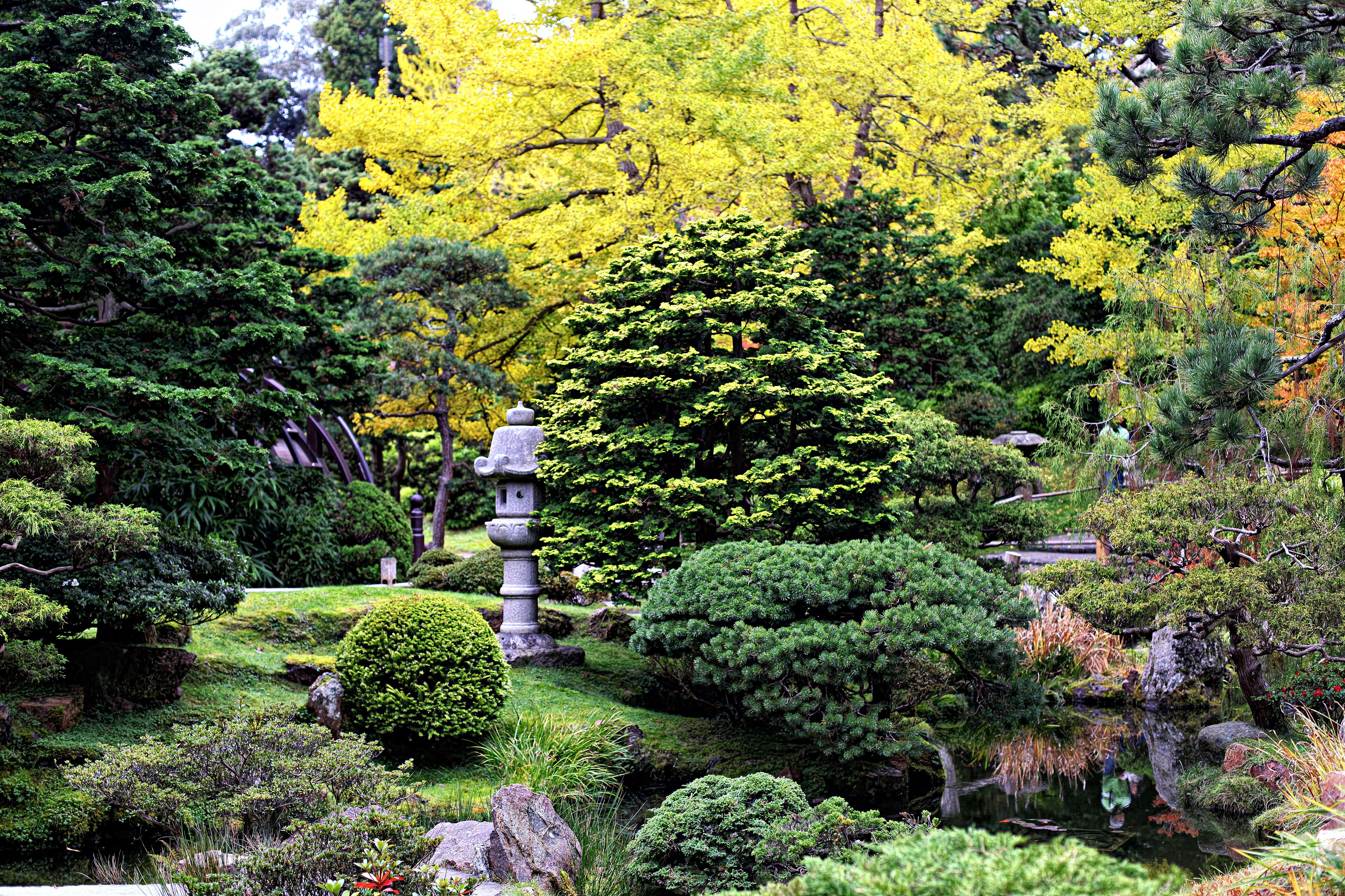 The Graceful Gardener The Japanese Tea Garden in Golden