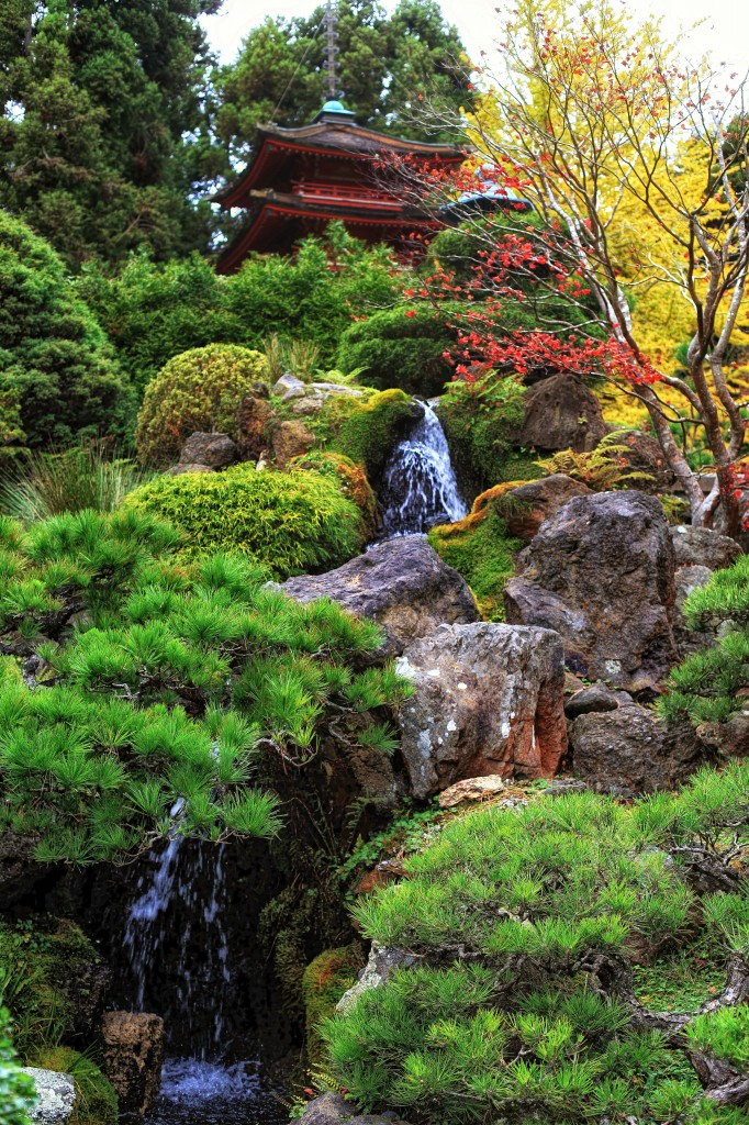 The graceful gardener the japanese tea garden in golden for Portland japanese garden koi