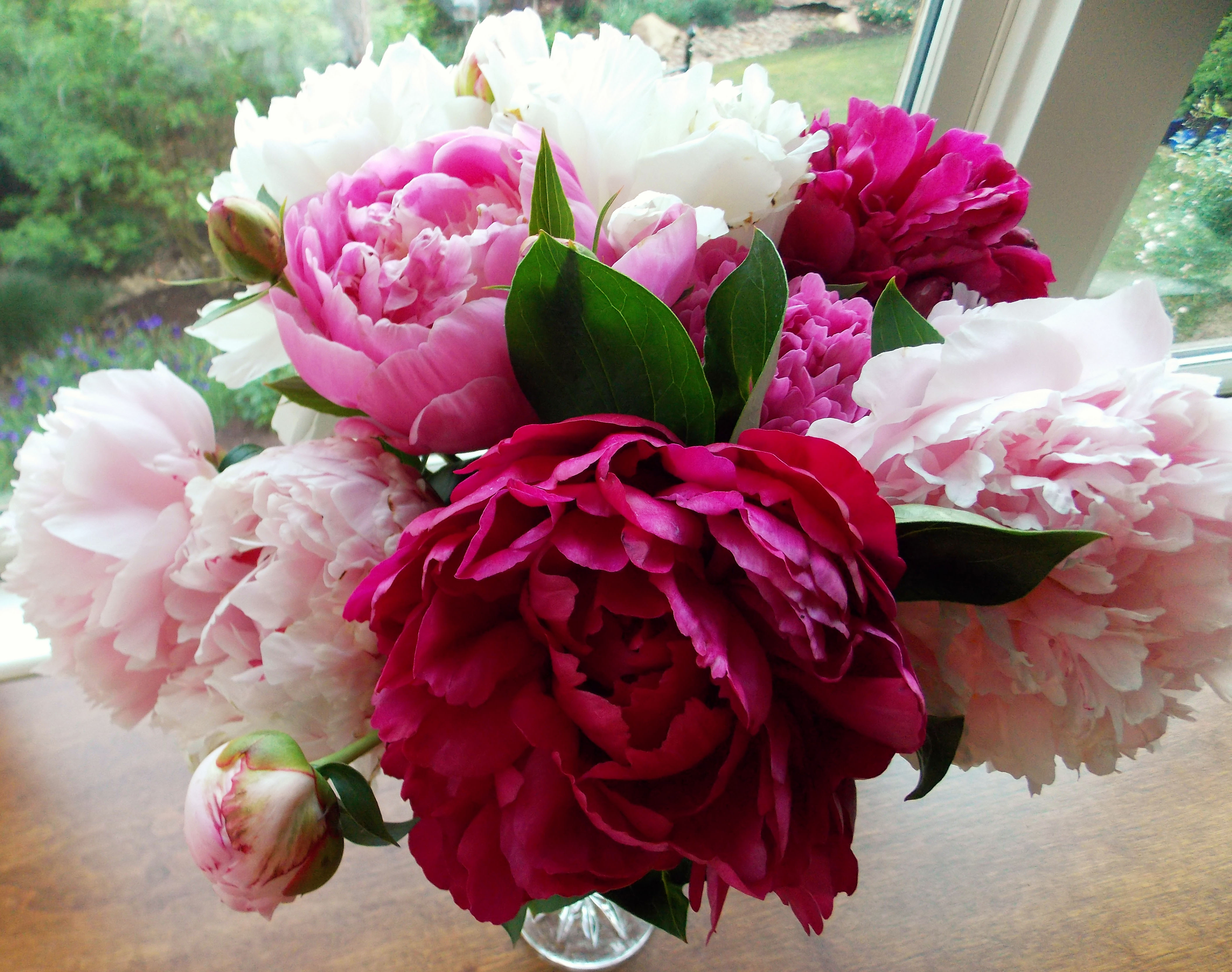 The Graceful Gardener Peonies