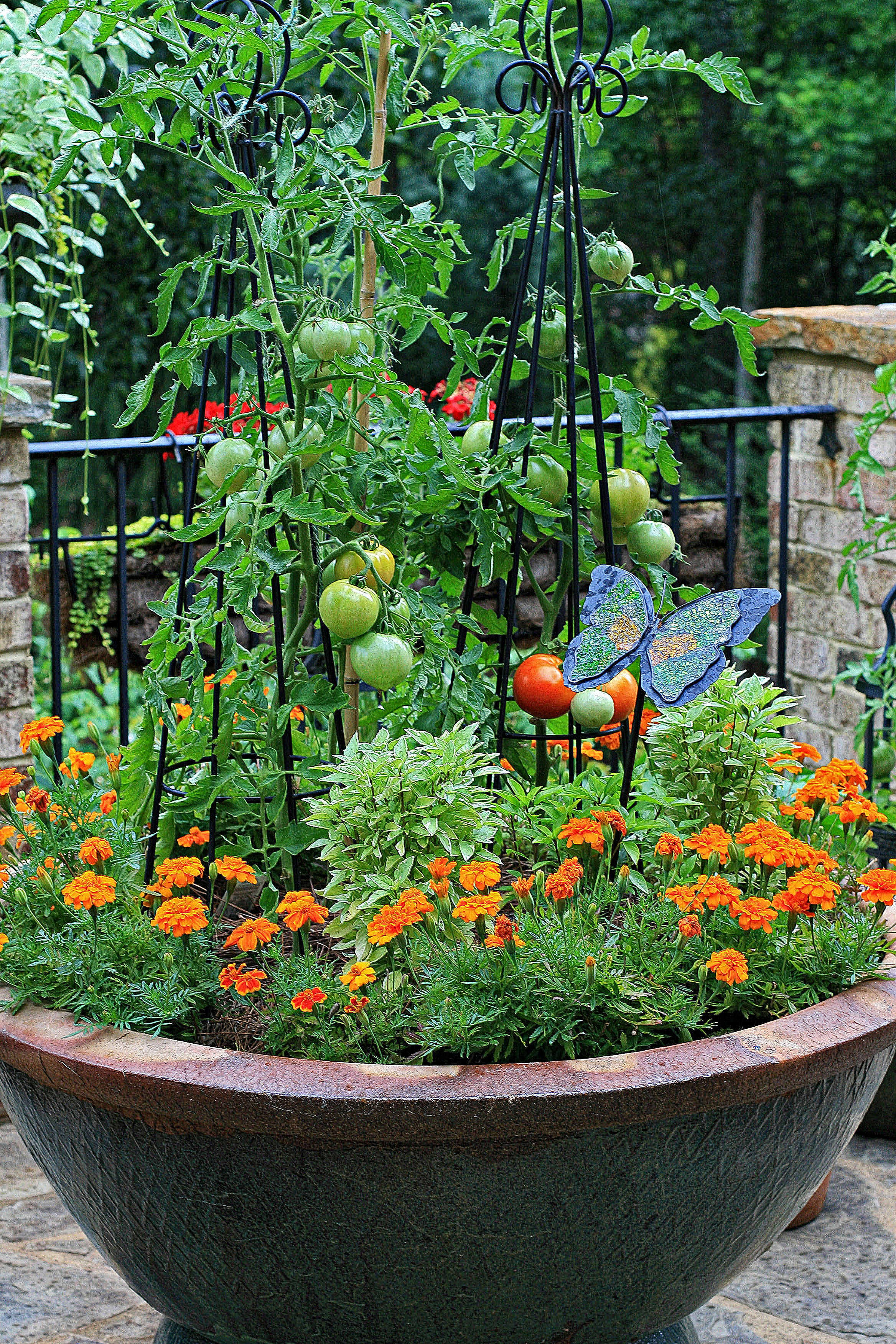Full sun container garden ideas photograph the graceful ga - Container gardens for sun ...