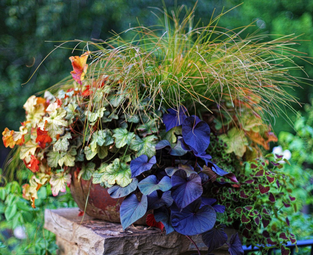 My container selected as finalist for Fine Gardening's 2012 Container Design Challenge 'Fantastic Foliage' .
