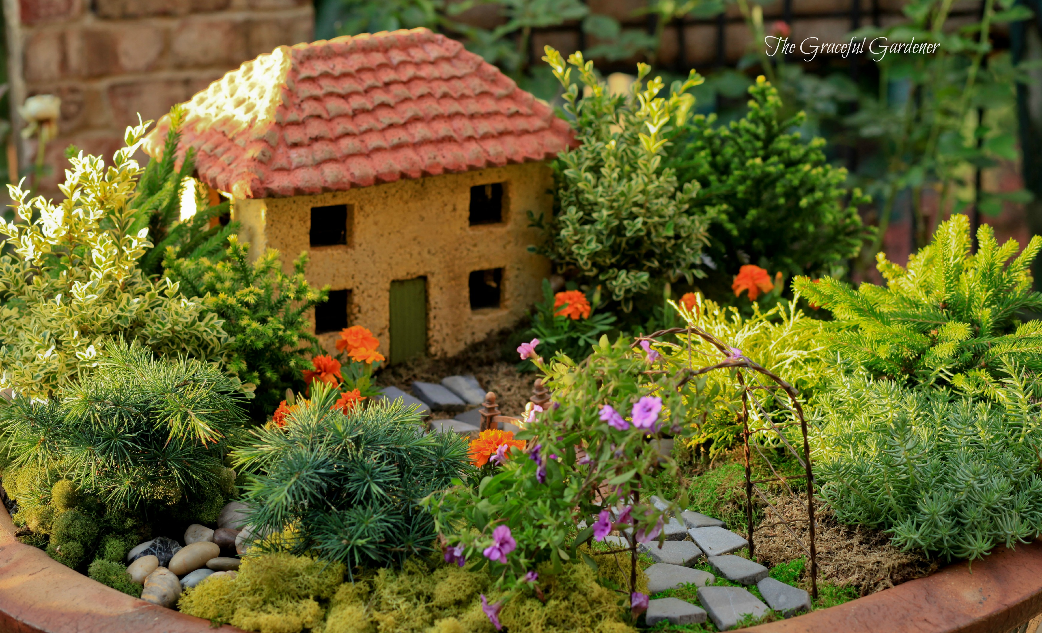 The graceful gardener miniature roses for Mini japanese garden