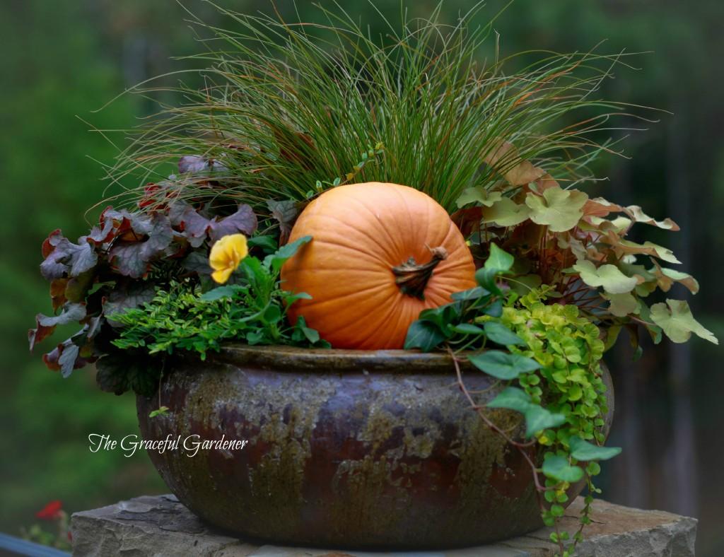 The Graceful Gardener » 2013 » October
