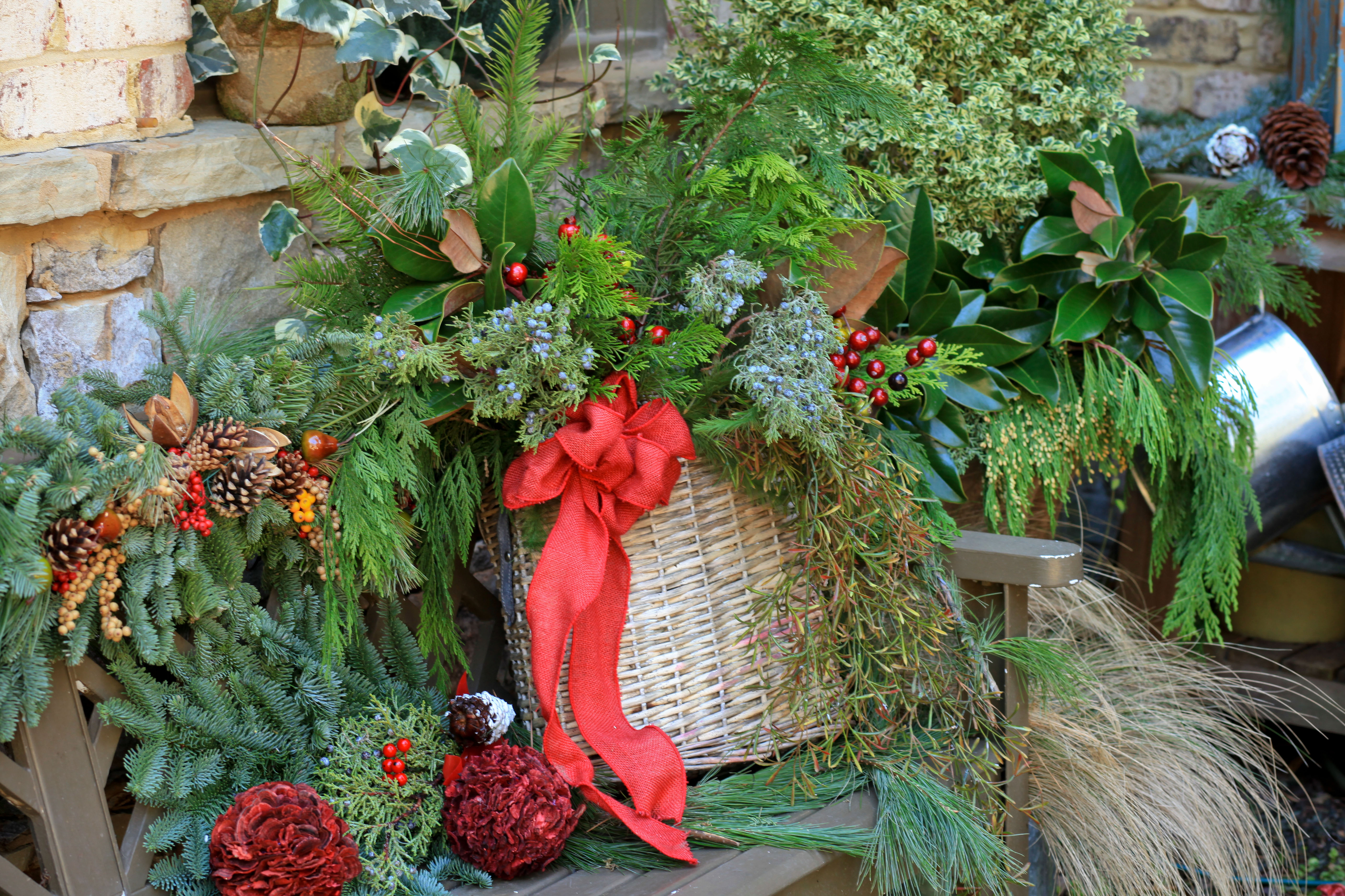 The Graceful Gardener » Christmas Garden