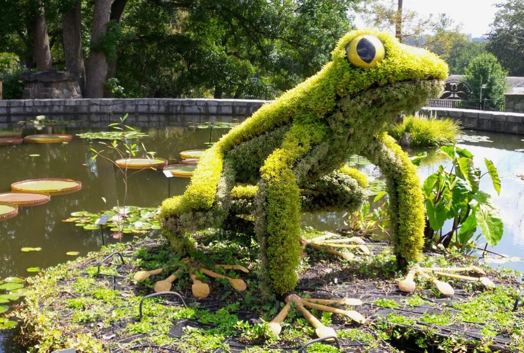 Frog lily pad