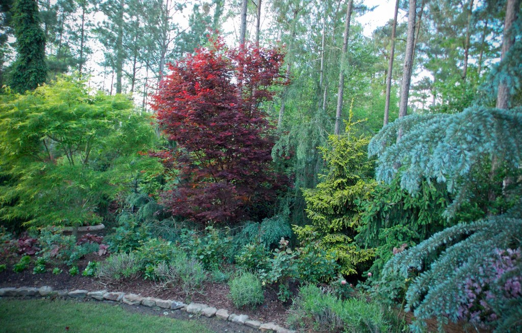 conifersand JapMaples_1