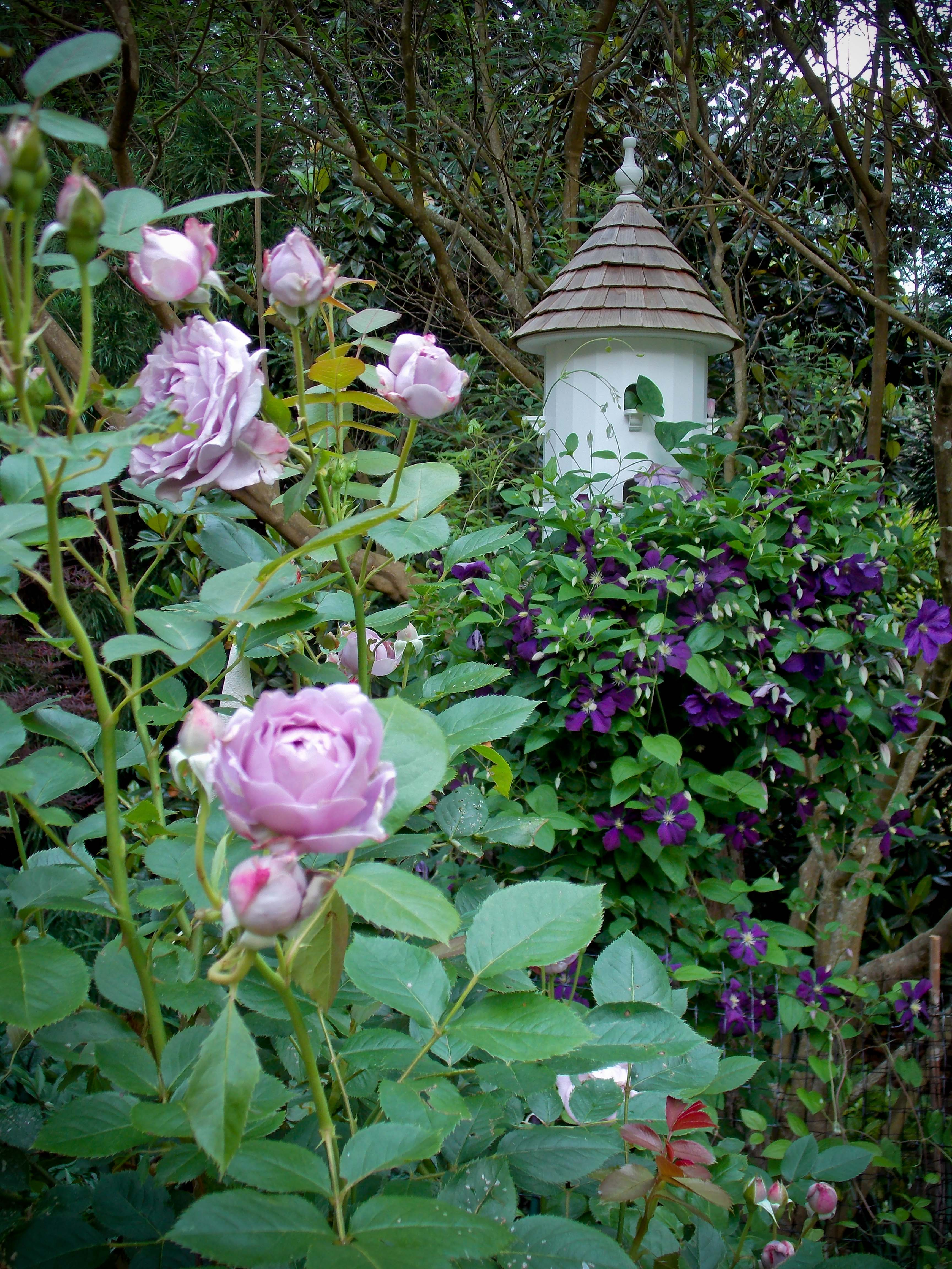 Roses In Garden: My Garden Is My Favorite Teacher