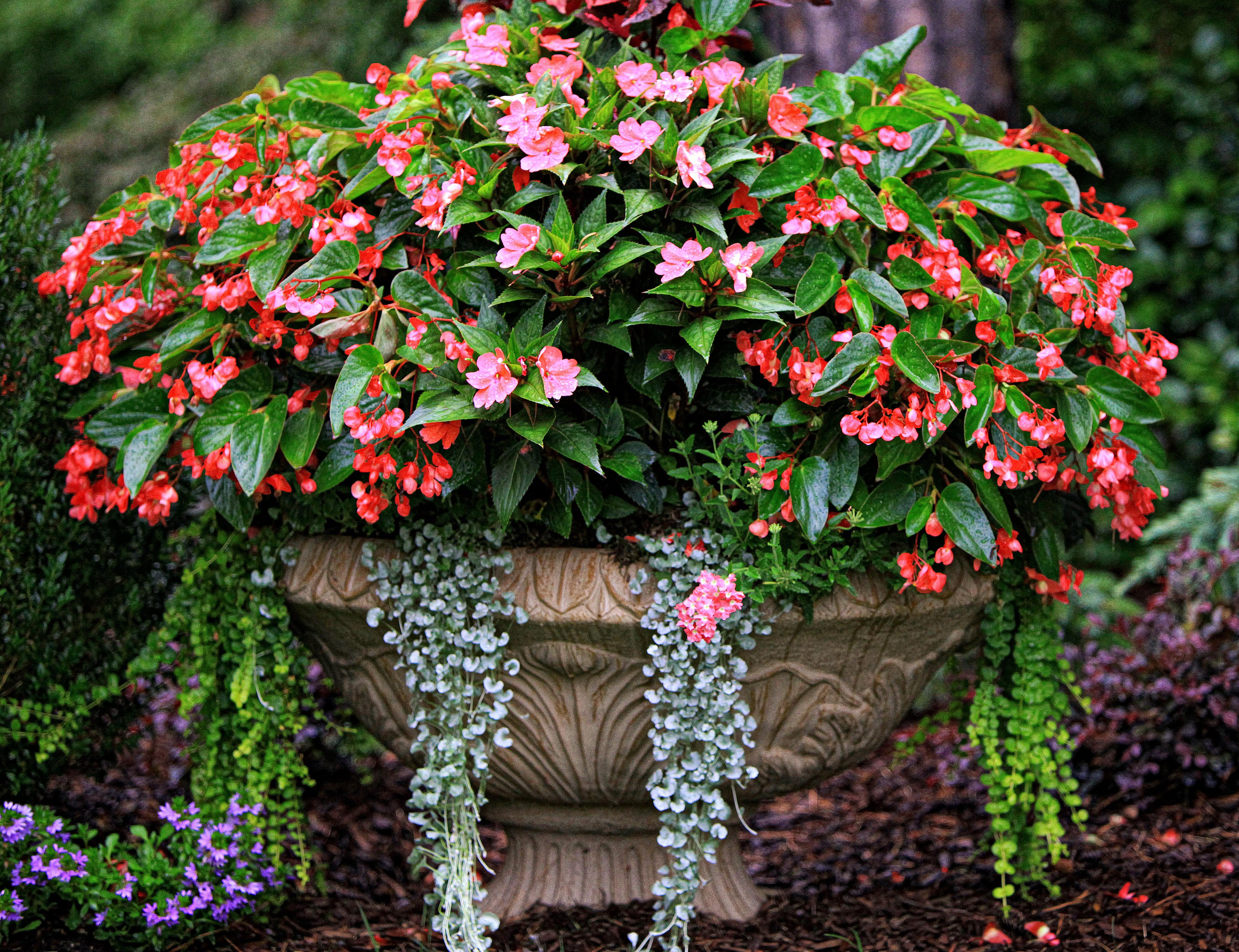 The Graceful Gardener s Containers – The Graceful Gardener