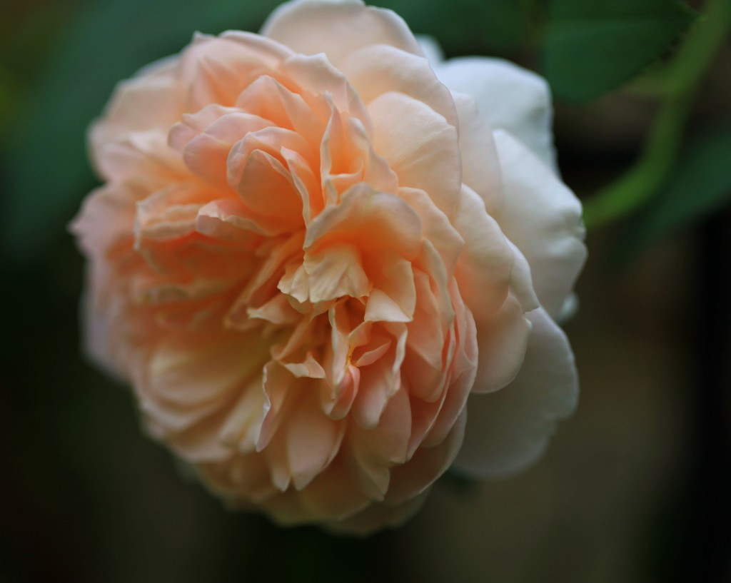 The Graceful Gardener – Page 3 – Inspiration for fine southern gardening