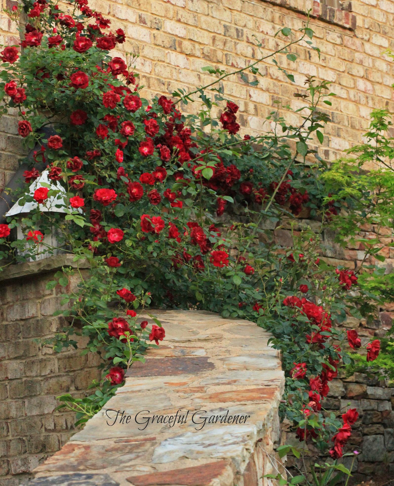 May 2013 – The Graceful Gardener