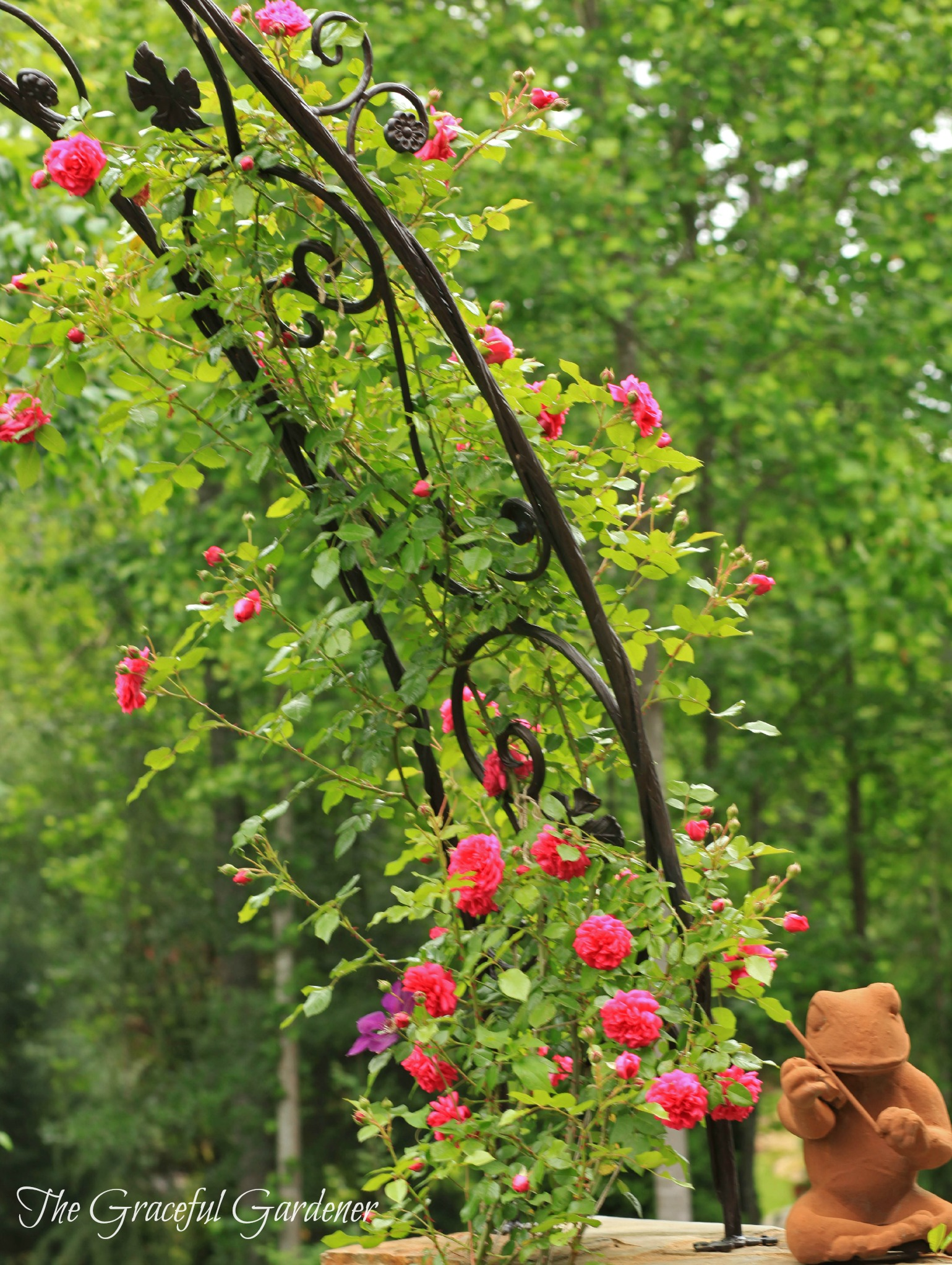 growing my roses up up and away the graceful gardener. Black Bedroom Furniture Sets. Home Design Ideas
