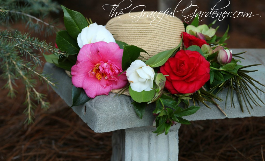 Assortment of Camellia's from my garden.