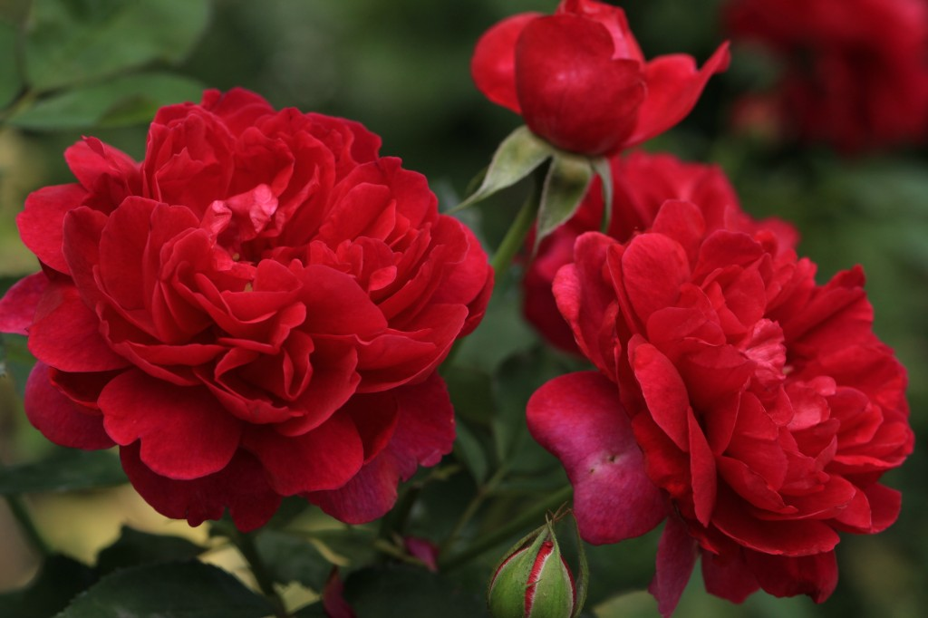 'Darcy Bussell'