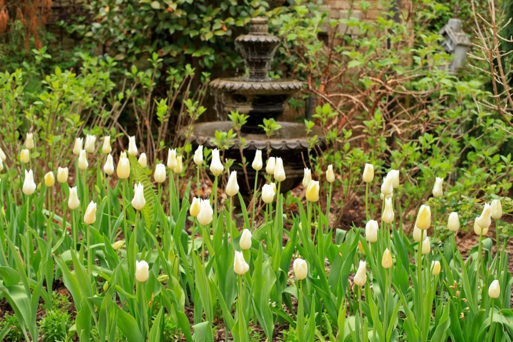 tulipfountain